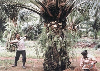 Palm Oil for production of Protected fats, C16's, Golden Flake and Calcium Soaps (Megalac, Magnapac)