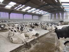 Nadins Hydramix will effectively control bacteria used alone or with a wide range of absorbent bedding materials on cow cubicles or with loose housed calves, cattle and other livestock