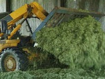 Consolidate well. Roll no more than 6 inch layers. Create an air tight seal. Use a silage additive
