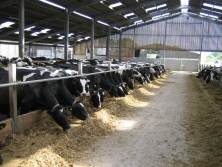 RWN specialises in the Nutrition and Feeding of high yielding Dairy Cows