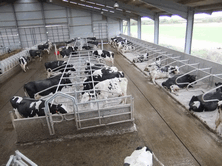 Hygiene is Important for Cow Health, Performance and Profitability