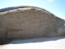 Maize Silage treated with Ultra-Sile Maize additive and sealed with Silostop for reduced losses, minimal spoilage and less heating
