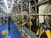 Reduce the cost of milk production