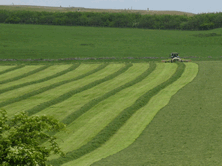 Silage Additives can make better silage and reduce cost of milk production