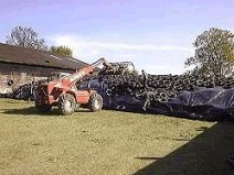 Dryer silages over 25% DM need a specialist high dry matter silage additive to prevent heating and reduce energy losses