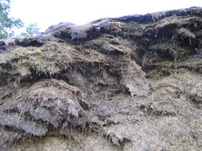 Lack of consolidation and inadequate sealing of silage pits often result in thousands of pounds worth of losses