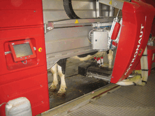 Good hygiene is essential in fully housed situations. Use Cluster-Flush on beds and housing as well as in the milking parlour