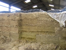 Quality silage can only be guaranteed if the pit is air tight. Seal quickly and thoroughly using Silostop Oxygen Barrier
