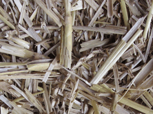Mycotoxins are often present in straw